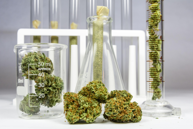Tête de fleur de CBD testé en laboratoire
